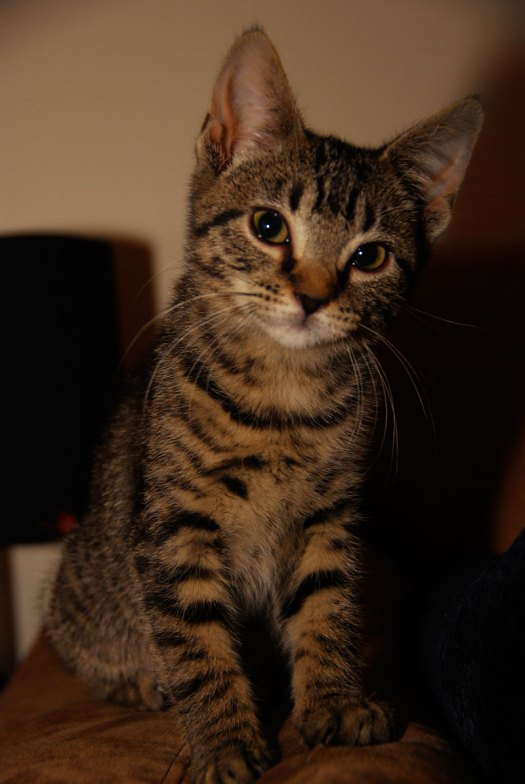 Tess, our tabby cat. Photo by Sean Mize.