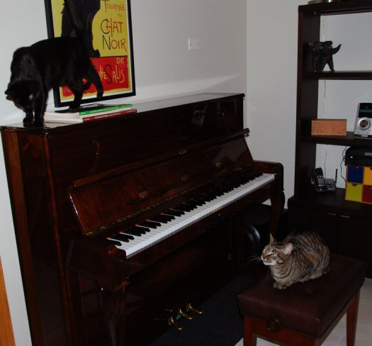 Cats on our Petrof upright piano. Photo by Sean Mize.